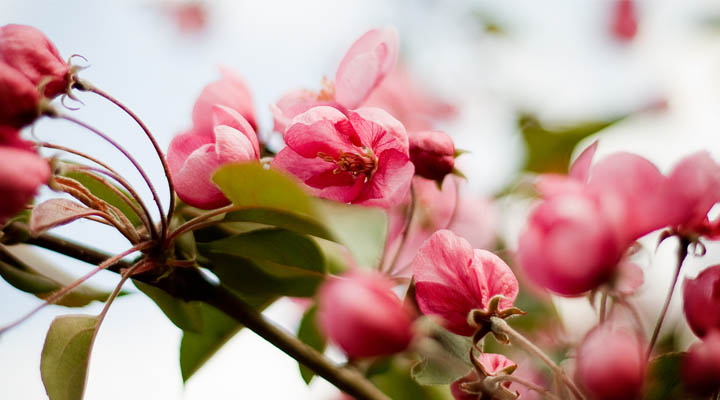 Aromatherapy benefits Spring Flowers | aromaterapie beneficii