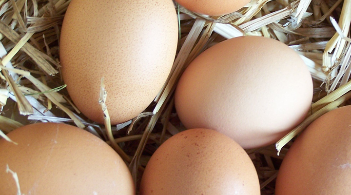 Totul despre oua. Bune sau nu in alimentatie All about eggs in our diet. Are they good or bad