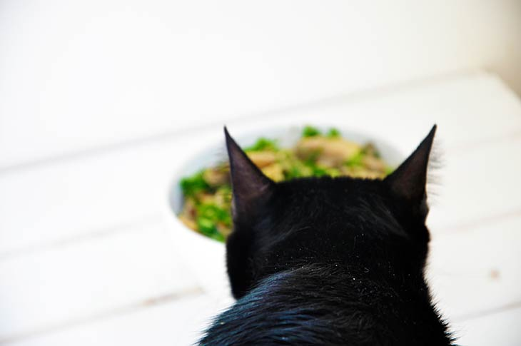 pisulina-black-cat-food