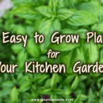 10 Easy to Grow Plants for Your Kitchen Garden