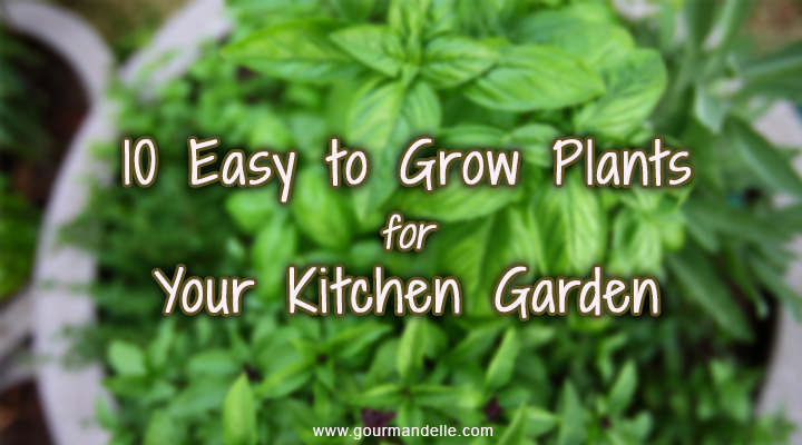 10 easy to grow plants for your kitchen garden gourmandelle for Easy to maintain outdoor plants