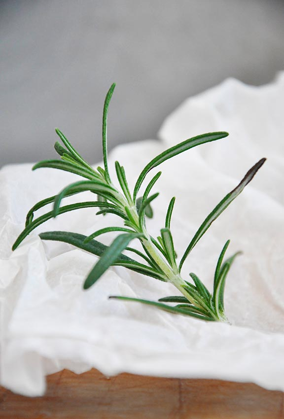 rosemary artistic photo