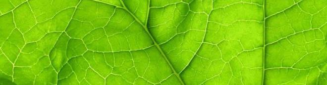 cura de detoxifiere cu clorofila