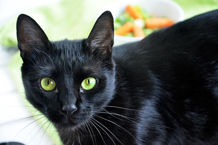 pisulina black cat