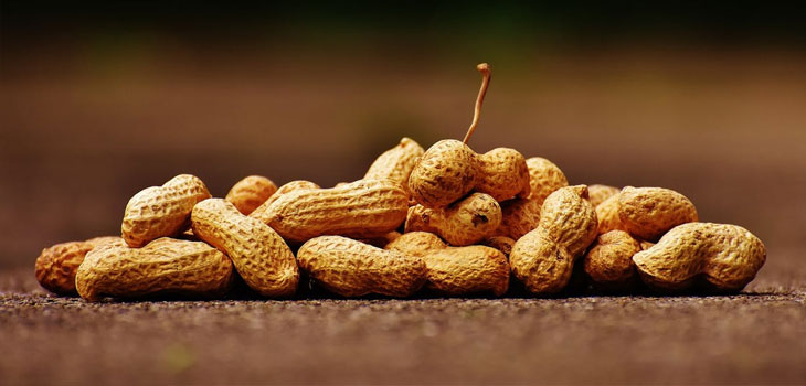 Peanuts Allergy