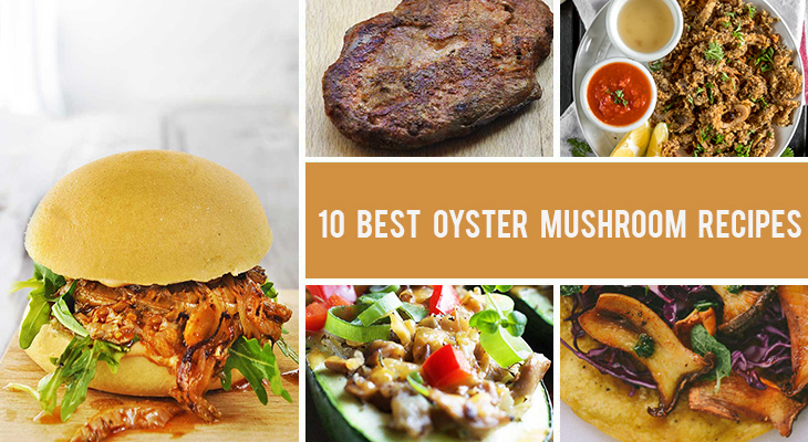10 Best Oyster Mushroom Recipes You'll Want To Make Again and Again